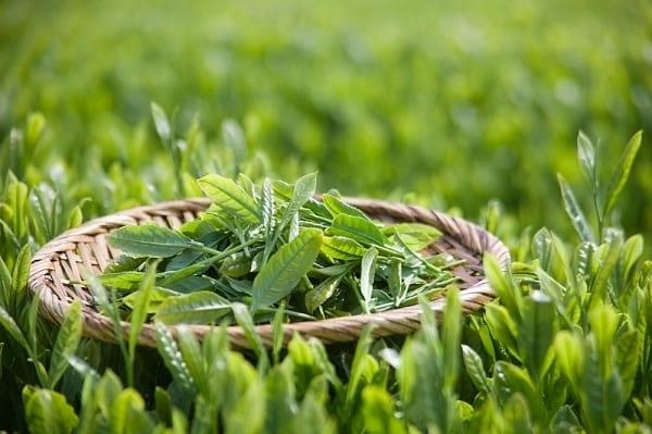 Trà thảo dược mùa đông