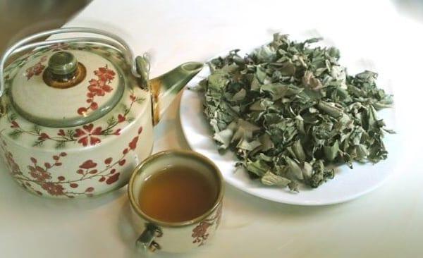 trà giảm cân từ lá sen