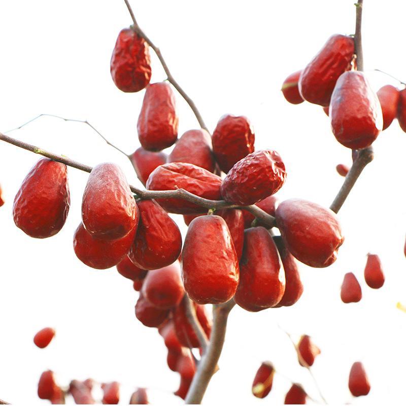Táo đỏ Khánh Phong
