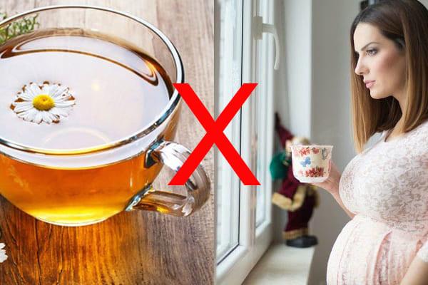 Ai không được uống trà hoa cúc
